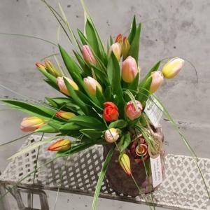 EKO kreator bukietu tulipanów (20-100 tulipanów)